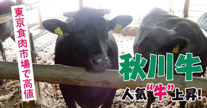 """秋川牛 人気""""牛""""上昇! 東京食肉市場で高値"""