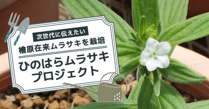 ひのはらムラサキプロジェクト
